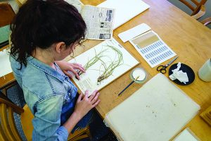 A student studies herbs at the herbarium