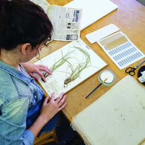 The Pullen Herbarium