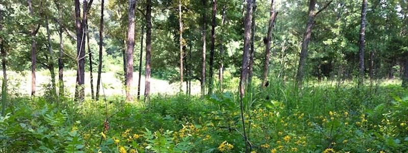 bioSlide_0004_oak woodland