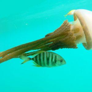 Biologists Developing Mobile App for Coastal Marine Assessment