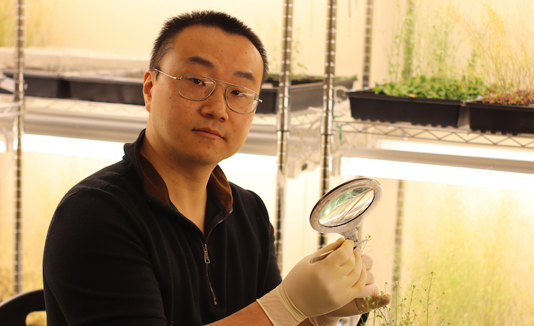 Yongjian Qiu, an assistant professor of biology at the University of Mississippi, is studying a plant gene that could help solve a problem caused by warming global temperatures. Qiu's work in this field is the subject of a new Nature Communications paper. Submitted photo
